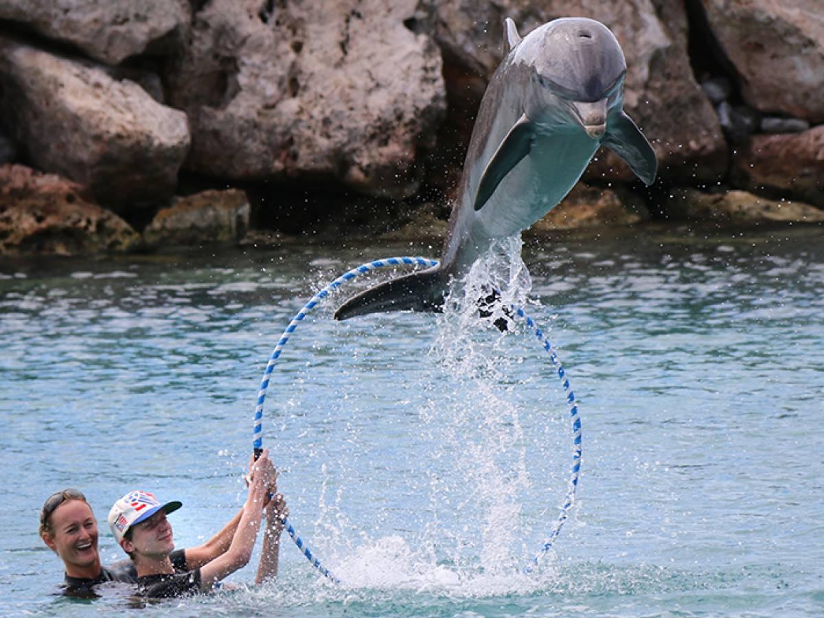 Lars, de trainer en dolfijn