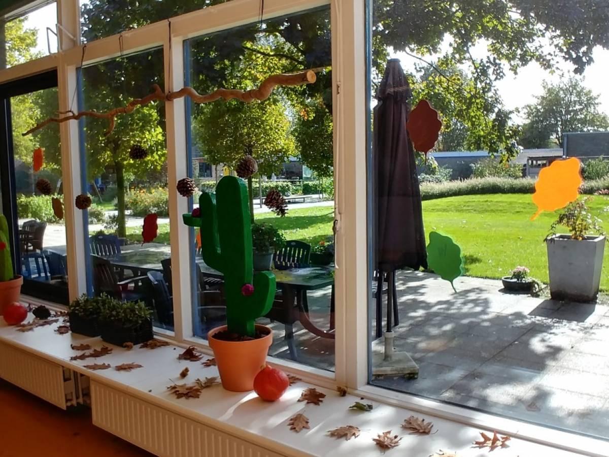 Cactus voor het raam